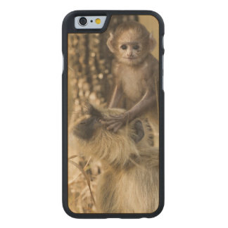 Hanuman Langur adult with young Carved® Maple iPhone 6 Slim Case