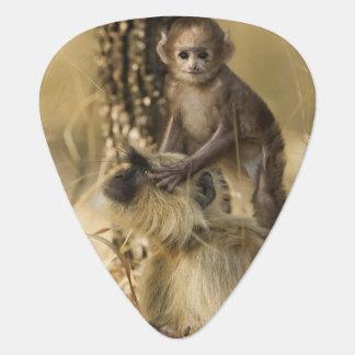 Hanuman Langur adult with young Guitar Pick