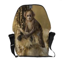 Hanuman Langur adult with young Messenger Bag