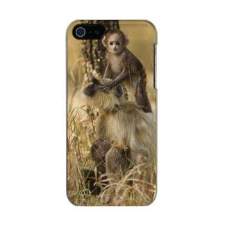 Hanuman Langur adult with young Metallic iPhone SE/5/5s Case