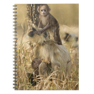 Hanuman Langur adult with young Spiral Note Book