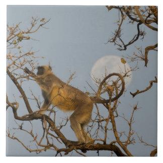 Hanuman Langur climbing in tree Ceramic Tile
