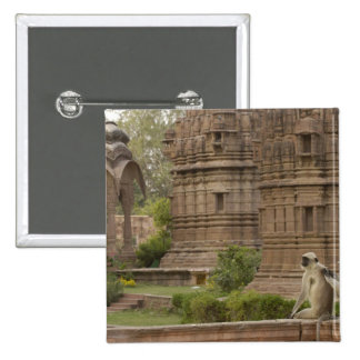 Hanuman Langurs or Black-faced, Common or Grey 2 Inch Square Button