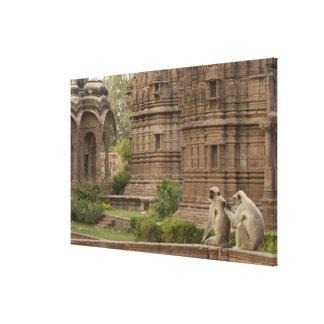 Hanuman Langurs or Black-faced, Common or Grey Canvas Prints