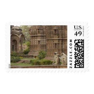Hanuman Langurs or Black-faced, Common or Grey Postage Stamp