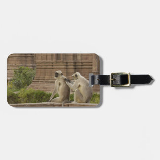Hanuman Langurs or Black-faced, Common or Grey Tag For Bags