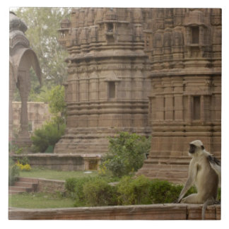 Hanuman Langurs or Black-faced, Common or Grey Tile