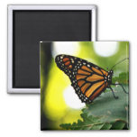 Happines es una mariposa iman de nevera