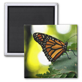 Happines is a Butterfly 2 Inch Square Magnet