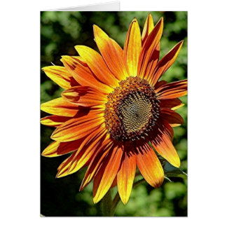 """Happiness in Orange""  Sunflower Card"