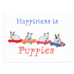 Happiness is Puppies - White Bull Terrier Pups Postcard