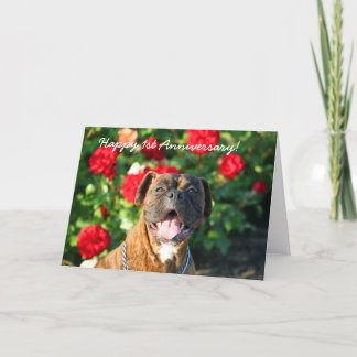 Happy 1st Anniversary Boxer Dog Greeting Card