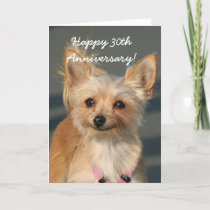 Happy 30th Anniversary Chihuahua Greeting Card