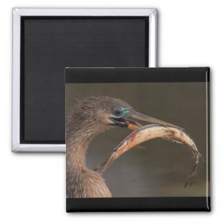 Happy Anhinga 2 Inch Square Magnet
