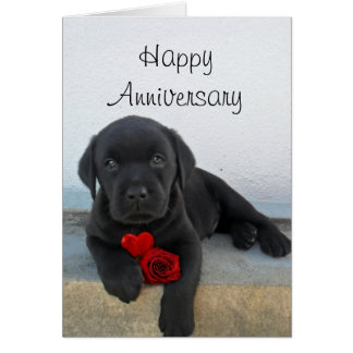Happy Anniversary Labrador puppy greeting card