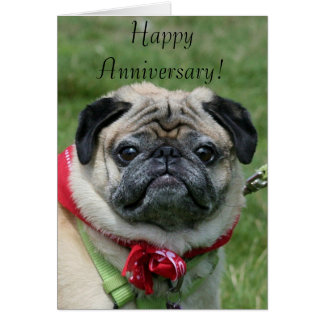 Happy Anniversary Pug Greeting Card