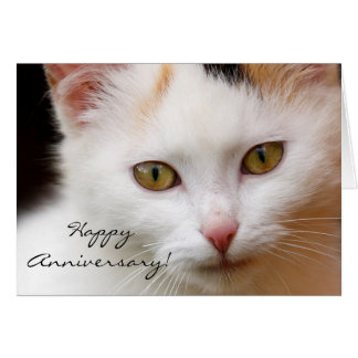 Happy Anniversary White cat greeting card