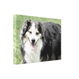 Happy Australian Shepherd Smiles Canvas Print