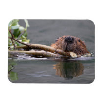 Happy Beaver Magnet