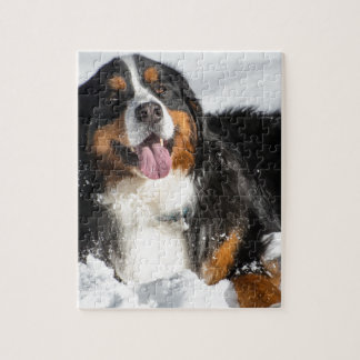Happy Bernese Mountain Dog In Winter Snow Jigsaw Puzzle