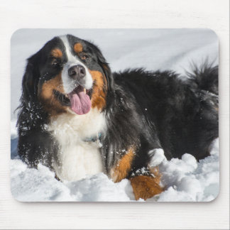 Happy Bernese Mountain Dog In Winter Snow Mouse Pad