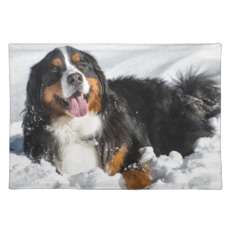 Happy Bernese Mountain Dog In Winter Snow Placemat