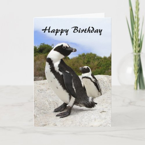 Happy Birthday African Penguins Humor Card