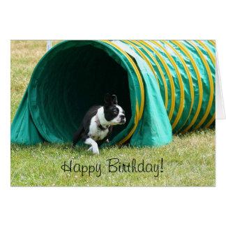 Happy Birthday Agility Boston Terrier Card