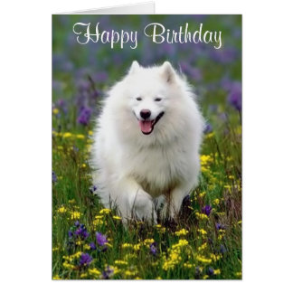 Happy Birthday American Eskimo Greeting Card