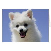Happy Birthday American Eskimo Puppy Dog Card