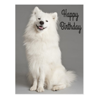 Happy Birthday American Eskimo Puppy Dog Postcard