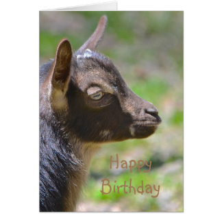 Happy Birthday Baby Goat Card