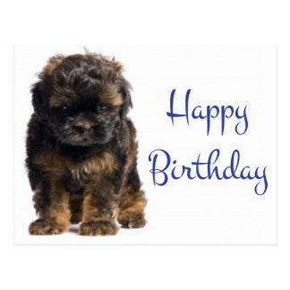 Happy Birthday Baby Havanese Puppy Dog Postcard