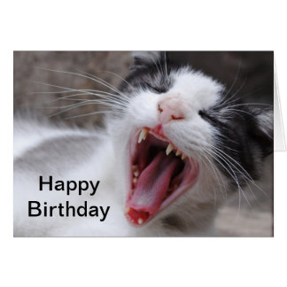 Happy Birthday Be a Lazy Cat Today Card