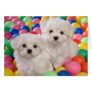 Happy Birthday Bichon Frise White Puppy Dog Card
