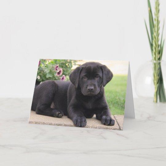 Happy Birthday Black Labrador Retriever Puppy Dog Card Zazzle
