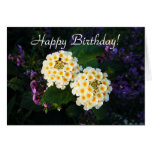Happy Birthday!, Blank Greeting Card