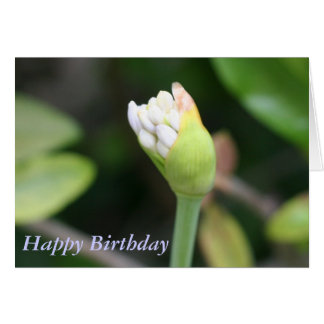 Happy Birthday Blue Agapanthus Flower Greeting Cards