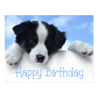 Happy Birthday Border Collie Puppy Dog Post Card