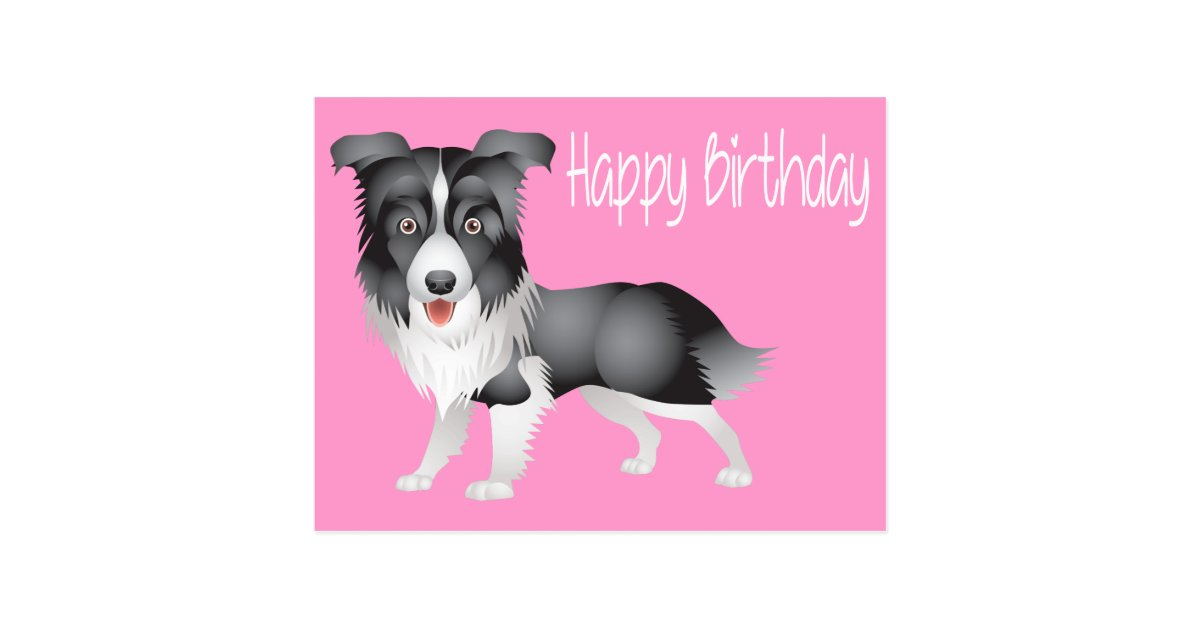Border Collie Birthday Postcards – Birthday Post Cards
