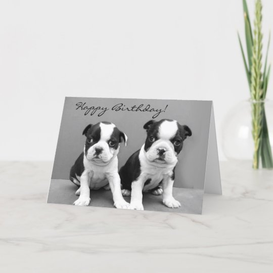 Happy Birthday Boston Terrier Greeting Card Zazzle