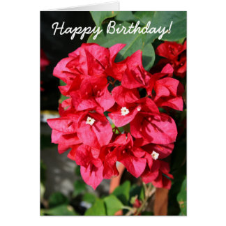 Happy Birthday Bouganville Greeting Card