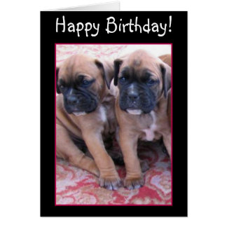 Happy Birthday Boxer puppies greeting card