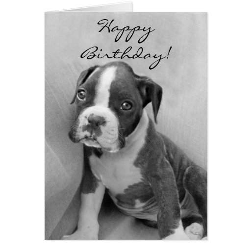 Happy Birthday Boxer puppy Greeting Cards