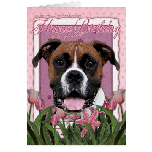 Happy Birthday - Boxer - Vindy Card