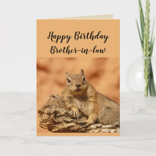 Happy Birthday Brother In Law Funny Squirrel Humor Card