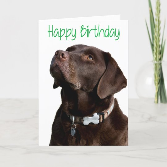 BLACK LAB SUNSET BEACH DOG GREETING NOTE PARTY INVITE THANK YOU BIRTHDAY CARDS