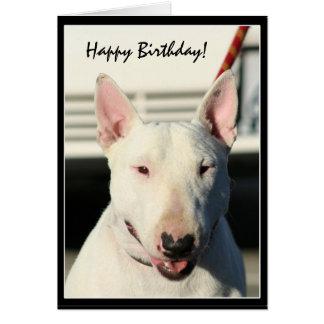 Happy Birthday Bull Terrier greeting card
