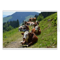 Happy Birthday Card Group OF Cows