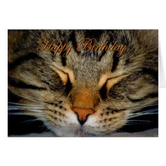Happy Birthday cat kitten kitty Birthday wishes Card